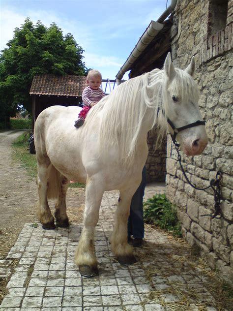 ha dada sur mon bidet le p ti prince sur cheval blanc ecurie de bouquinghen