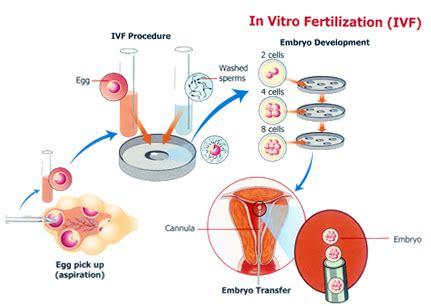 Detox After Successful Ivf Drugs by In Vitro Fertilization Ivf