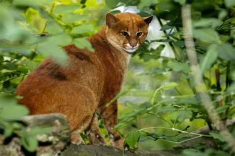 imagenes de animales de mexico 5 im 225 genes de la vida salvaje de m 233 xico elegidas por nat