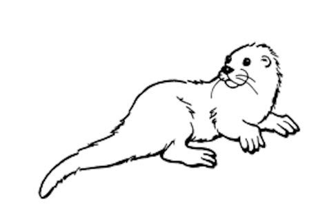 Otter Coloring Page free coloring pages of otter