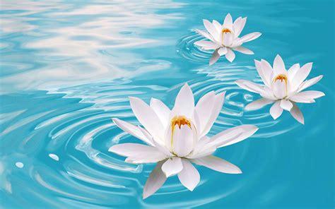 imagenes de flores espirituales buddha boats hear the boat sing