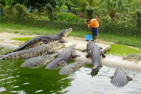 start   crocodile farm    big bite