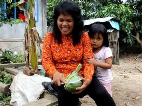 Bibit Mangga Alpukat Pasuruan buah mangga harum manis perlis harumanis agro jurnal doovi