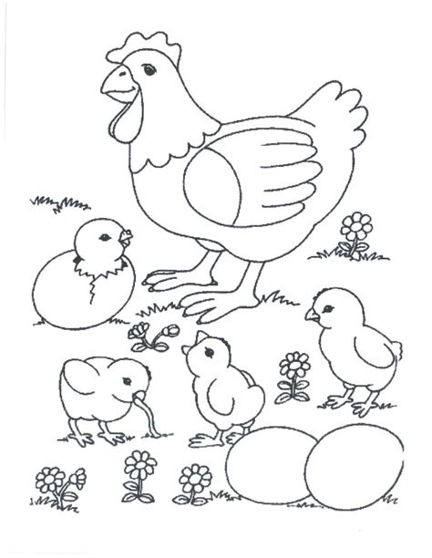 free coloring pages of chicken