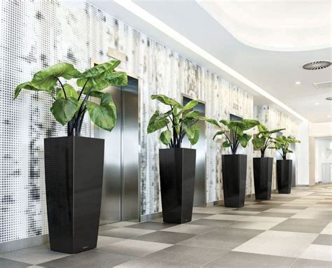 plants that do well in low light 13 best office plants office plants that do well in low