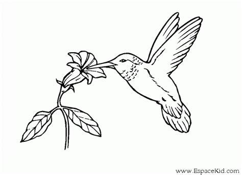 Coloriage Un Oiseau Et Une Fleur 224 Imprimer Dans Les