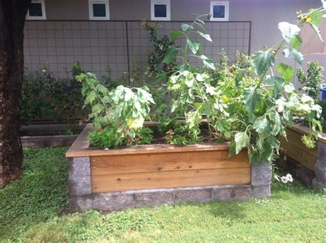 cinder block garden bed cinder block and wood garden bed backyard heaven