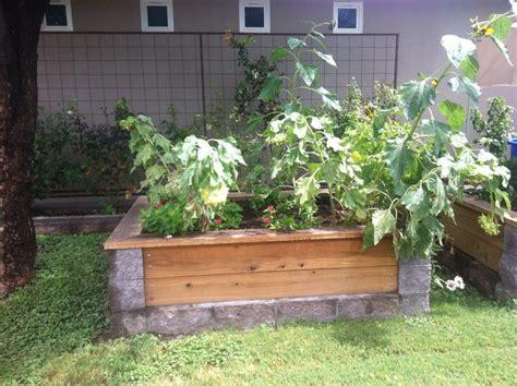 cinder block flower bed cinder block and wood garden bed backyard heaven