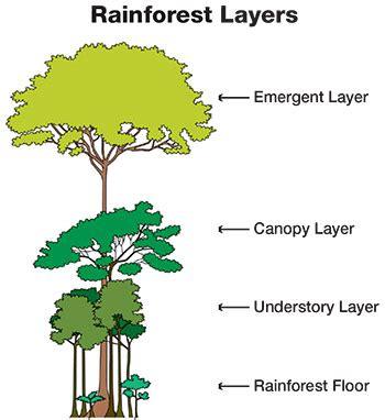 rainforest diagram readytest