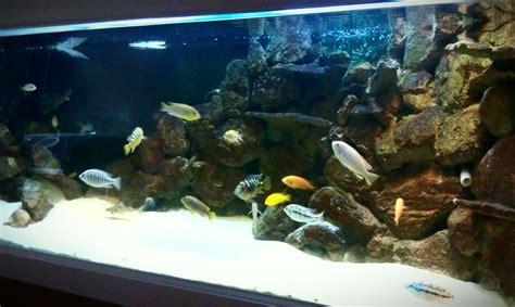 aquascape store aquascape store gallery barrier reef anubias nana petite