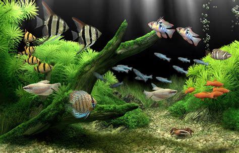 wallpaper bergerak pc anime apakah sobat punya aquarium di rumah bila tidak saya akan