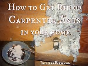 how to get rid of carpenter ants apps directories