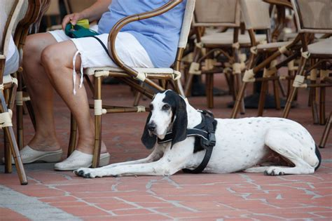 restaurants that allow dogs friendly restaurants other eateries in around pets4homes