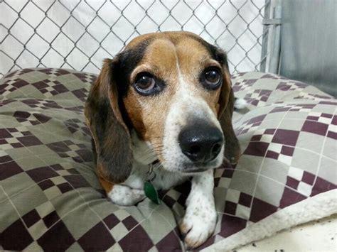 rescue dogs iowa dogs forever cedar rapids ia rescue