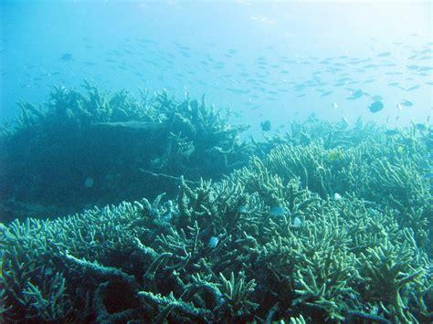Underwater Landscape Pictures şimdilik Benim Se 231 Tiğim Fonlar Bunlar Eyer Sizlerin Elinde