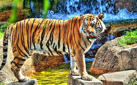 tiger print full hd wallpaper and background image tiger full hd wallpaper and background image 2560x1600
