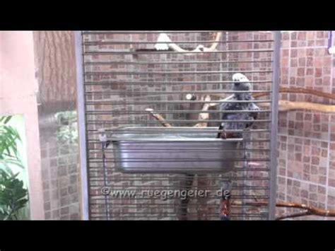 papageien badewanne neue badewanne