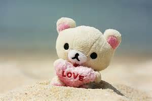Cute bears pics daily