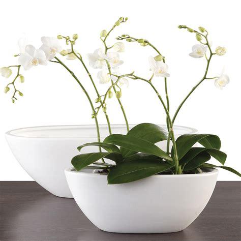 Orchid Planters Pots by Scheurich Orchid Plant Pot Zen Panna Scheurich Shop