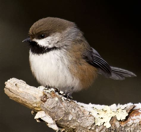 climate change the risks for michigan birds the outdoor