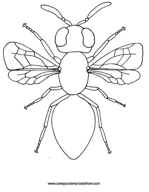 insect templates the creepy crawlies show colouring pages arts crafts