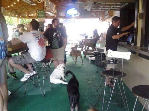 puppy bar dogs at bar picture of bar tripadvisor