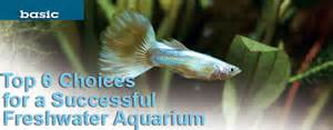 Popular freshwater fish for beginners top 6 choices for a successful