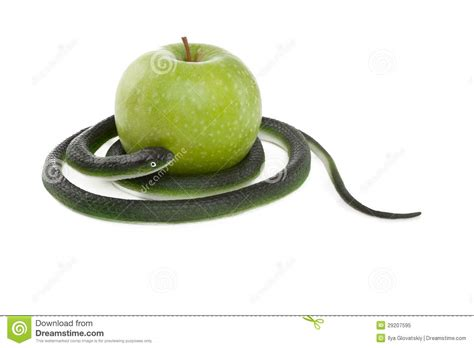 snake coiling   green apple royalty  stock