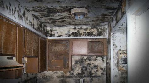 mold in the house dealing with a mold problem in your rental house atlanta property management