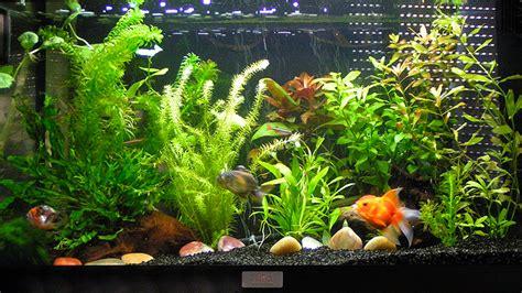 Poisson Exotique Pour Aquarium by Le Site Du Poisson L Aquarium Pour Poisson