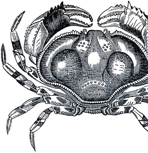 clipart domain free domain crab image the graphics