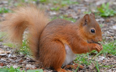 Floor Animals by Squirrel On The Forest Floor Wallpaper Animal Wallpapers 47618