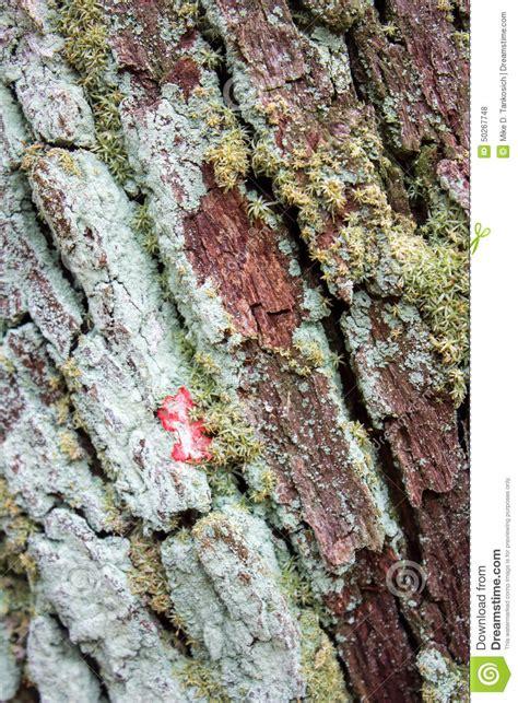 bark fungus stock photo image 50267748