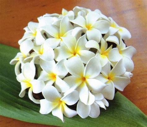pomelia fiore pomelia pianta piante da giardino caratteristiche