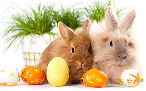 google wallpaper easter easter bunny wallpaper android apps on google play