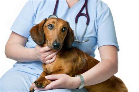 zantac for dogs canine zantac