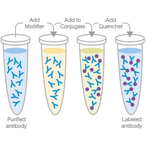 s protein hrp conjugate hrp conjugation kit easy hrp labeling abcam
