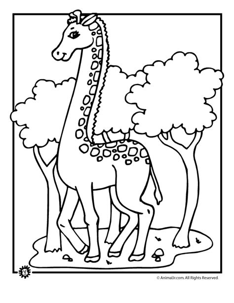 cartoon giraffe coloring pages