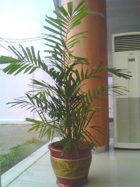 Lu Hias Untuk Teras Rumah tanaman hias indor tanaman dalam ruangan tanaman dalam