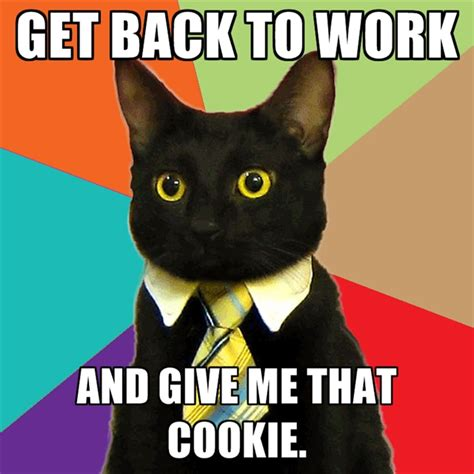 business cat memes create meme
