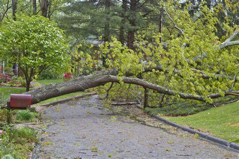 home insurance and fallen trees fallen tree liability