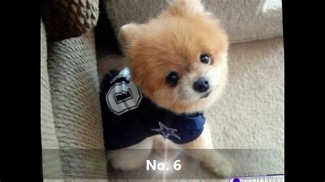 top puppies top 10 cutest puppies
