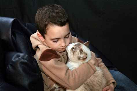 therapy dogs for depression 5 ways cats are great therapy for anxiety or depression in catster