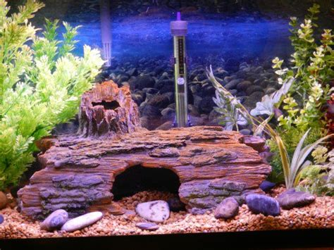 how to keep fish tank water clear cloudy fish tank water causes and solutions pethelpful
