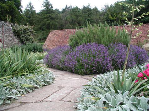 passende pflanzen zu lavendel gestalten mit lavendel staudeng 228 rtnerei gai 223 mayer