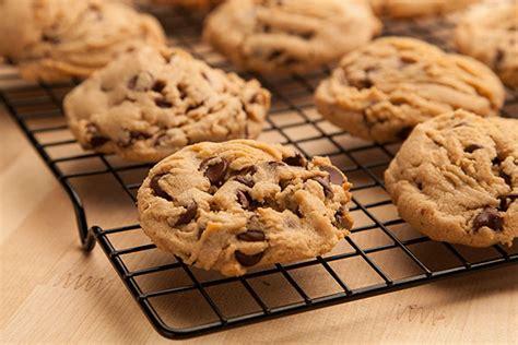 peanut butter biscuit recipe recipe peanut butter chocolate chip cookies