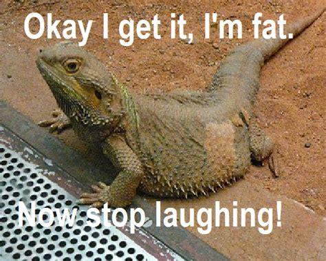 Dragon Memes - bearded dragon memes