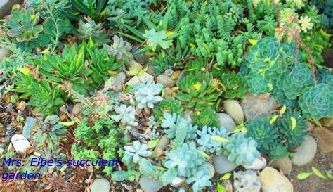 Succulent Gardens by Socal Succulents And Cactus An Extraordinary Garden In Ojai And A Recipe For
