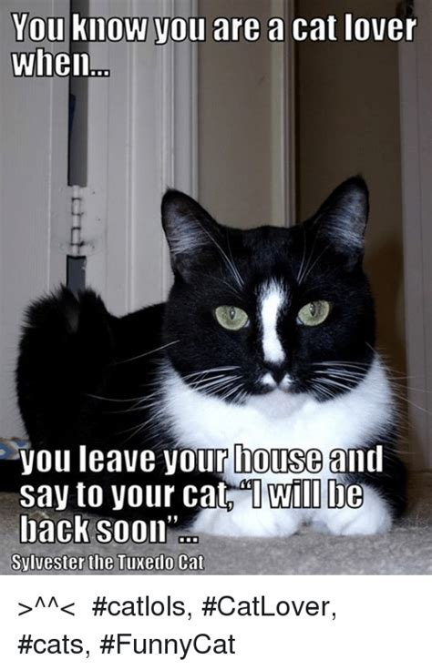 Tuxedo Baby Meme - iie need to address the uluan of tuxedo cats being unable to participate informal fridays meme