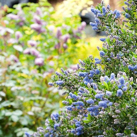 top native plants of southern california california